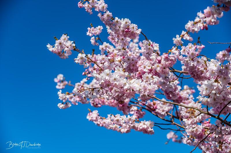 Spring blossom-2109.jpg