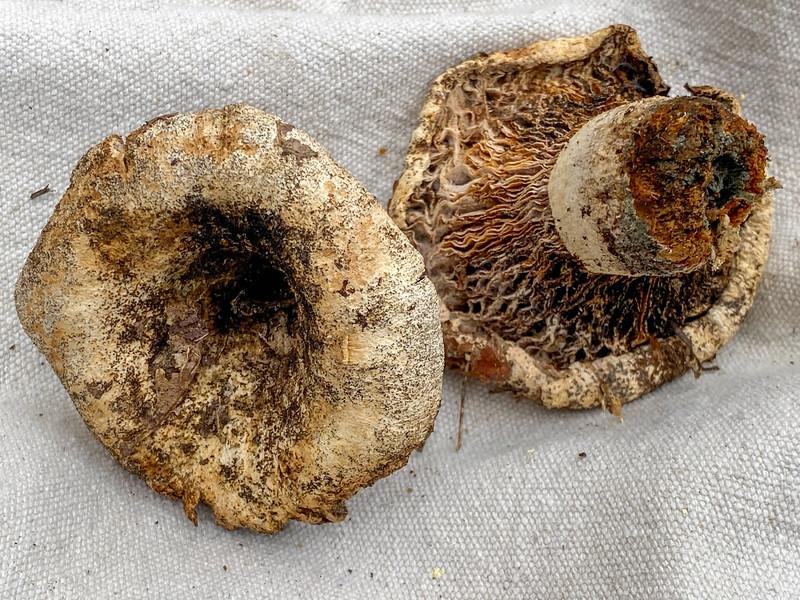 Mushroom-26