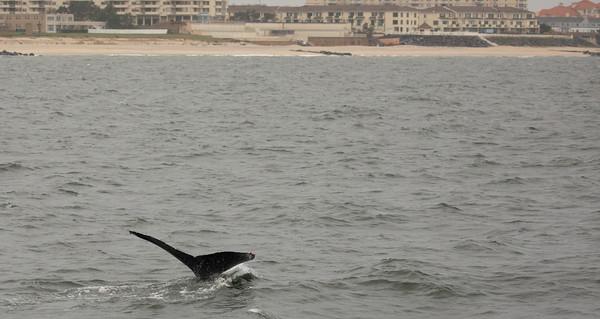 Jersey shore whale watch Oct 20-269.jpg