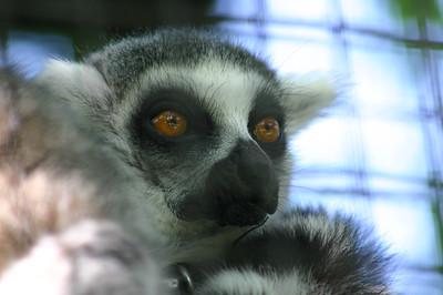 Nature - Primates