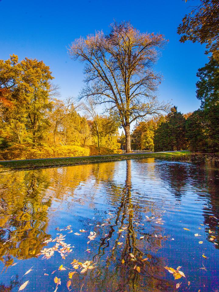 宾州长木公园,秋色宜人