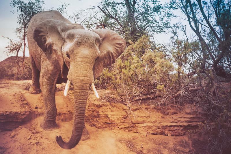Elephant-Charge.jpg
