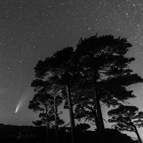 Los ancianos y el cometa #2