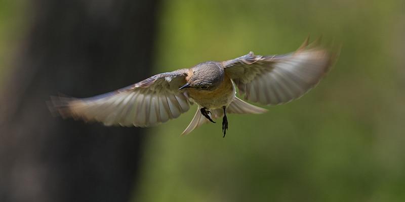 Robin-1.jpg
