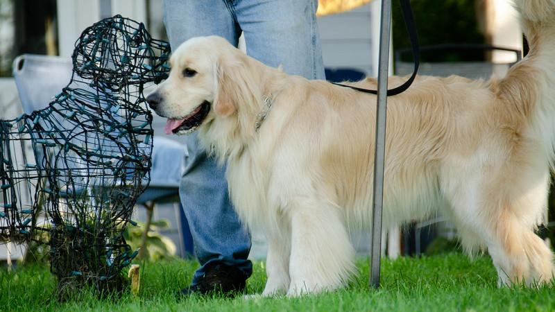 PuppyParty18-684.jpg