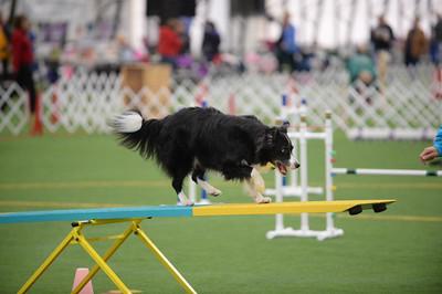 Dauphin Dog Training Club October 18-19