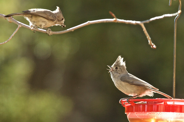 Santa Fe Birds