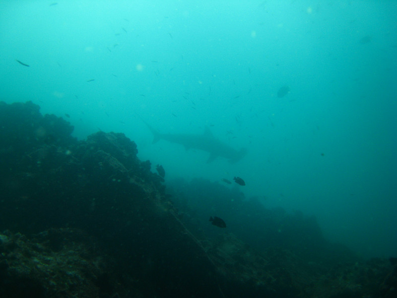 Diving in the Galapagos (227 of 392)