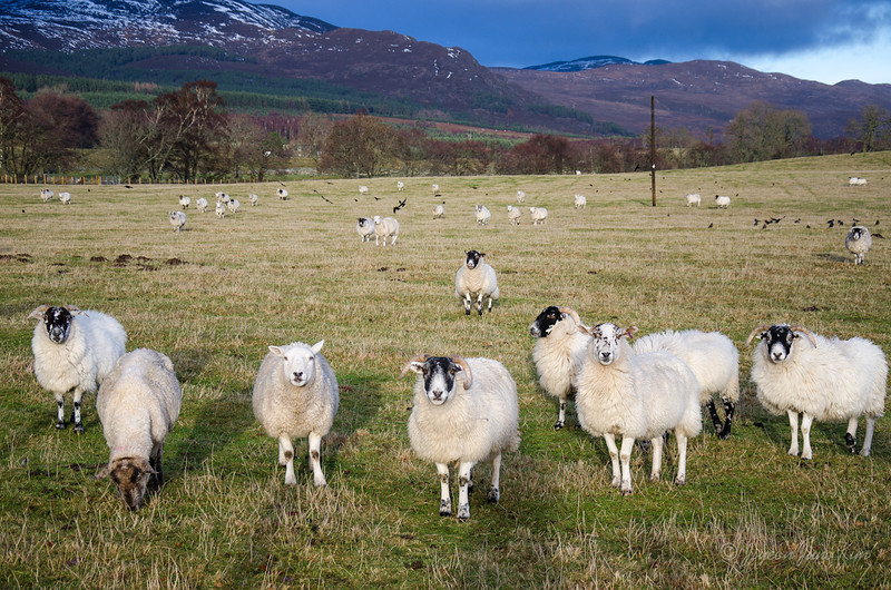 Scotland-Highland-9073.jpg