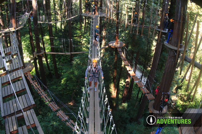 sequoiaportrait_1473443701358.jpg