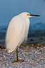 Egret on Watch at  Anastasia Park #! 02/14
