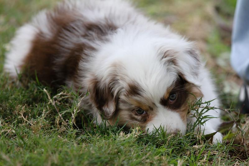 Terri's Pup