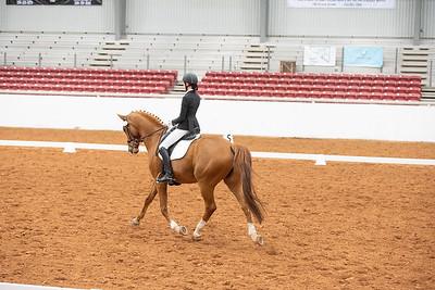Horse 129
