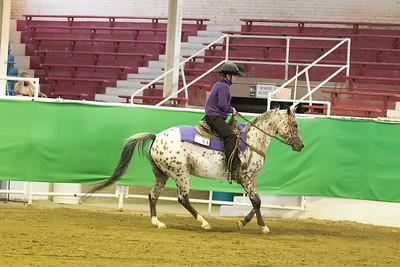 54 - Reg. Arabian/Half Arabian Western Pleasure Open