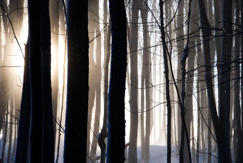 mystic-forest.jpg