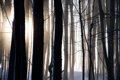 Winterscenes
