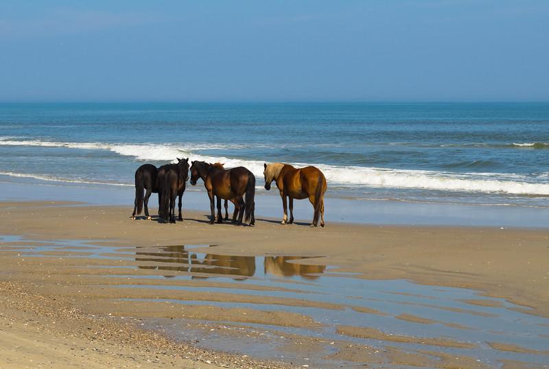OBX - Wild Horses on the Beach (re-p).jpg