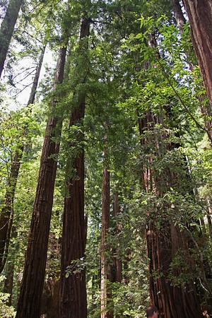 Muir Woods / July 11, 2009