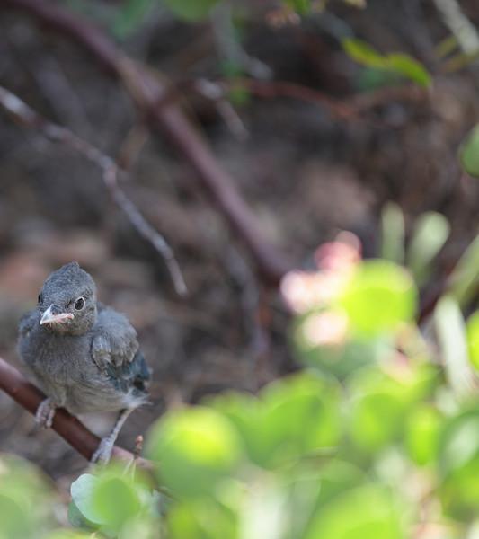 bird_23.JPG