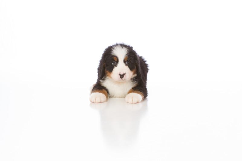 2013-Pearson Pups-Jun02-0290.jpg
