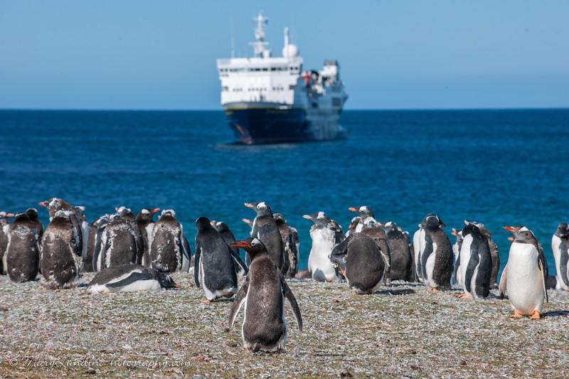 Antarctic-190