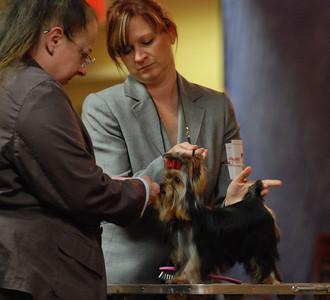Yorkshire Terrier Regional Specialty 2010