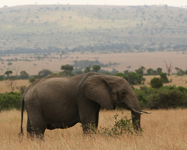 East Africa, Serengeti and Zanzibar - Klein's Camp - Day 1