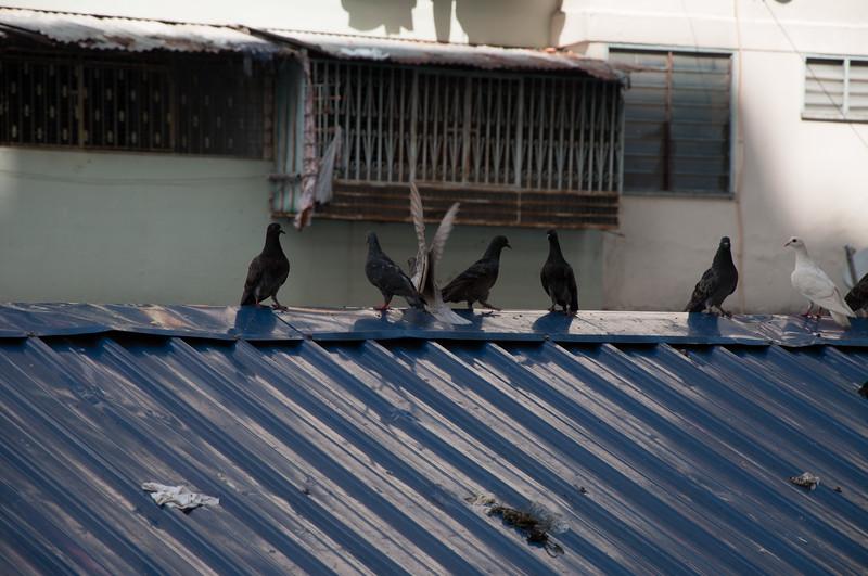 20091213 - 17136 of 17716 - 2009 12 13 - 12 15 001-003 Trip to Penang Island.jpg