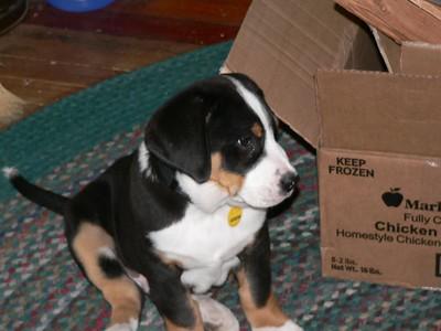 Brewster, Day 2