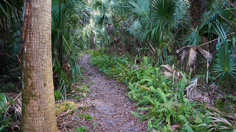 Tunnel of palm fronds over trail