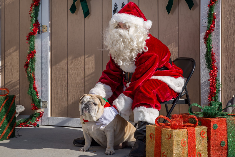 Pet Pictures With Santa-105.jpg