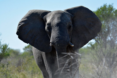 Botswana: Central Kalahari Game Reserve: Day 3: 2019