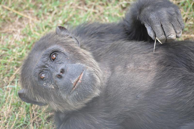 East Africa Safari 17.jpg