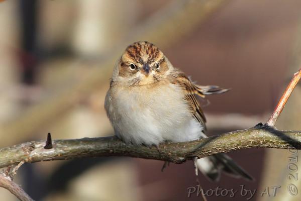 2010-10-28 Riverlands Migratory Bird Sanctuary