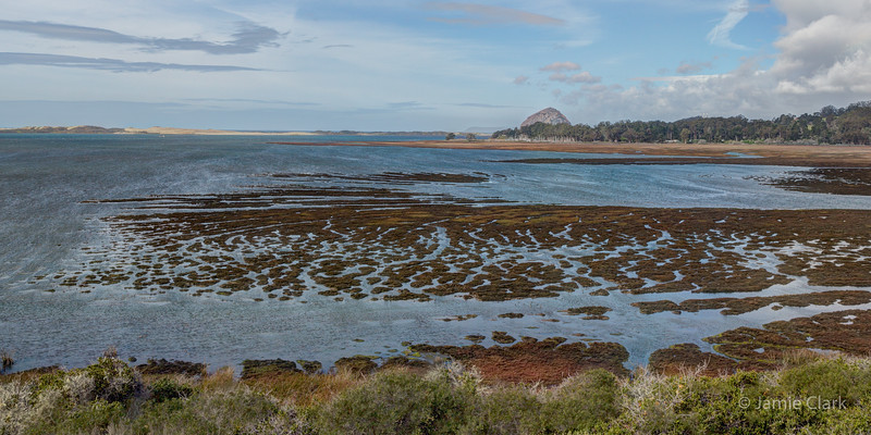Morro Bay, seen from Elfin Forest