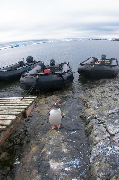 Antarctica 2015 (47 of 99).jpg