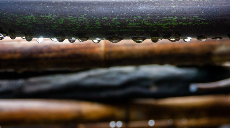 Bamboo 2, Hakone Gardens,  Saratoga, California, 2006