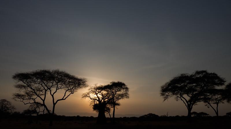 Sunset in Tarangeri National Park