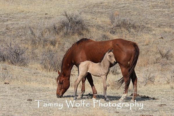 Horses, Domestic