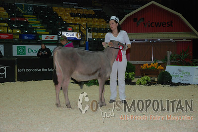 Quebec Spring Brown Swiss 2015