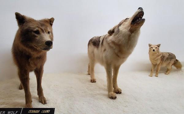 KY, Cave City - Wildlife Museum, 2019