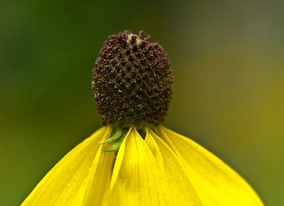 2010 Wildflowers