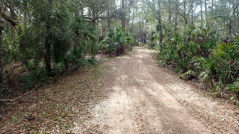 Dirt road in woods