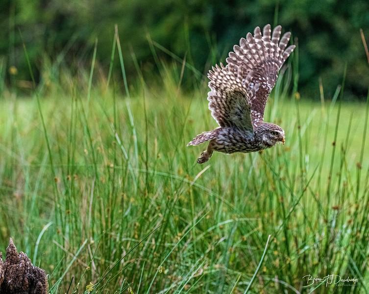The Little Owl Shoot-6799.jpg