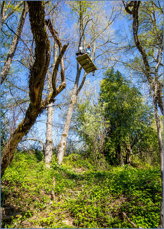 ". The seventh tree-sitter nicknamed ""Crow\"" is suspended in the alder tree canopy not far from Shell Lane alongside a creek. Photo by Steve Eberhard."