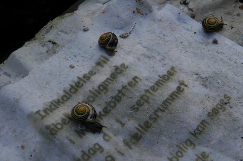 Snails - Christiania, Copenhagen
