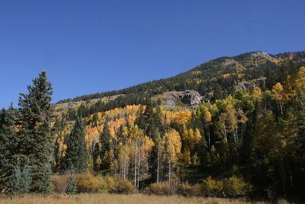 Durango, CO; Aspens