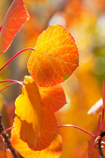 Autumn Leaves In Autumn 006 | Wall Art Resource