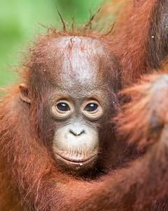 Borneo & Sulawesi (5/13)