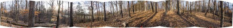 OP 17 Northwest forest central